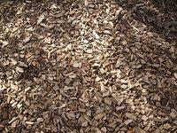 Nadelen van boomschors: erkennen en oplossen