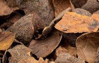 Verschil tussen cacaodoppen en boomschors